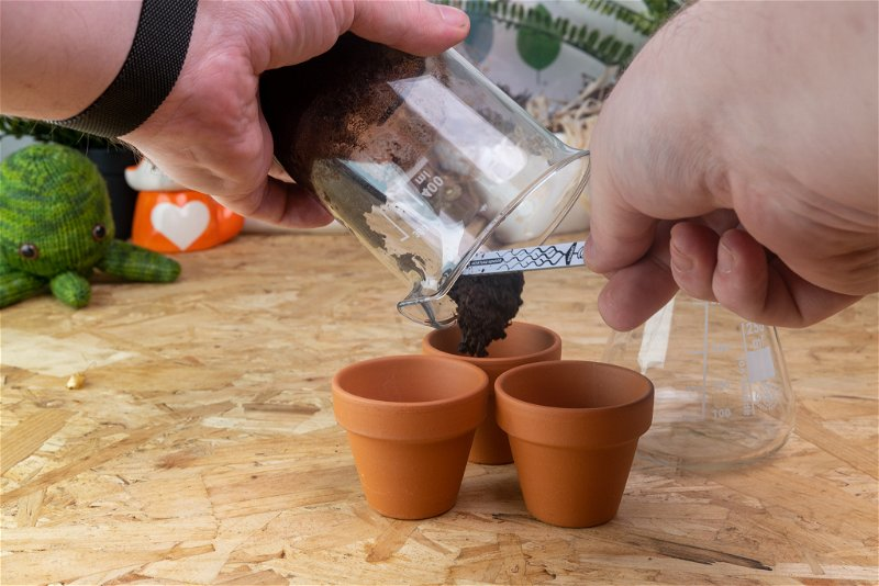 Adding rehydrated soil to plant pots