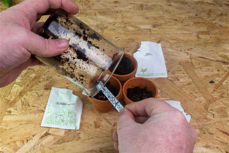 Adding seeds to plant pots